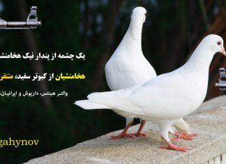 نفرت هخامنشیان از کبوتر سفید - خرافات هخامنشیان